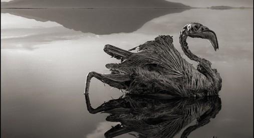 滅びの美学。アフリカ死の湖で動...