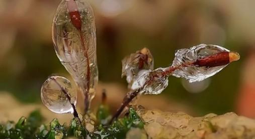 micro_winter_01