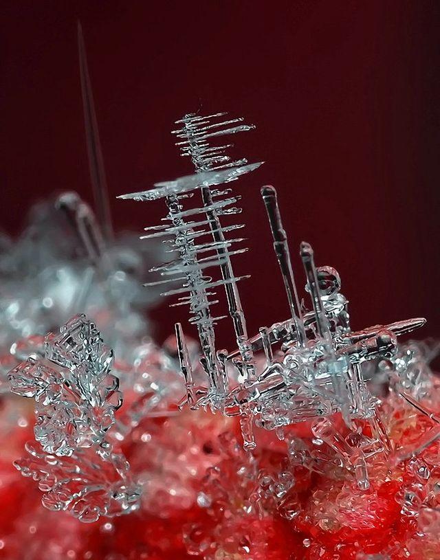 micro_winter_02