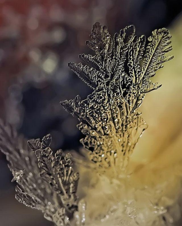 micro_winter_18