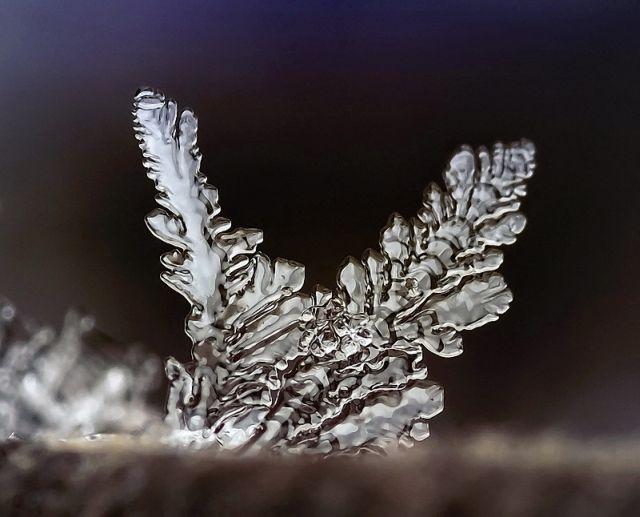 micro_winter_19