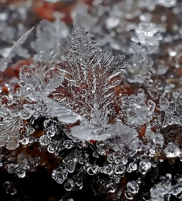 micro_winter_23