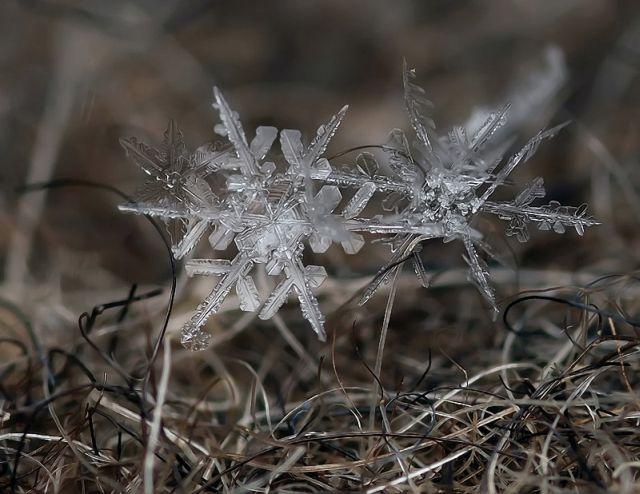 micro_winter_24